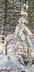 Snow Covered Spruce, oil, 30x16, SOLD