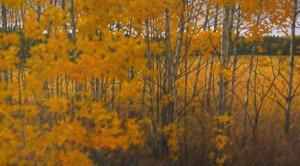 autumn trees, oil, 30x48, framed, SOLD
